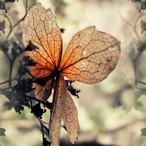 La-fleur-du-mal